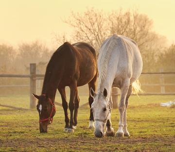 Tipp – Fellwechsel Pferd