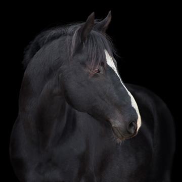 equinova®