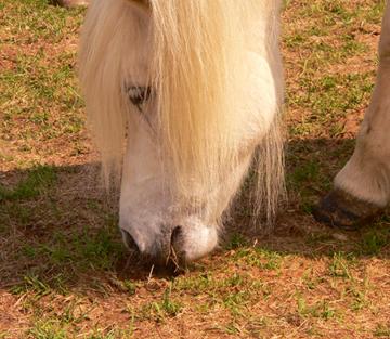 Ohne Huf kein Pferd