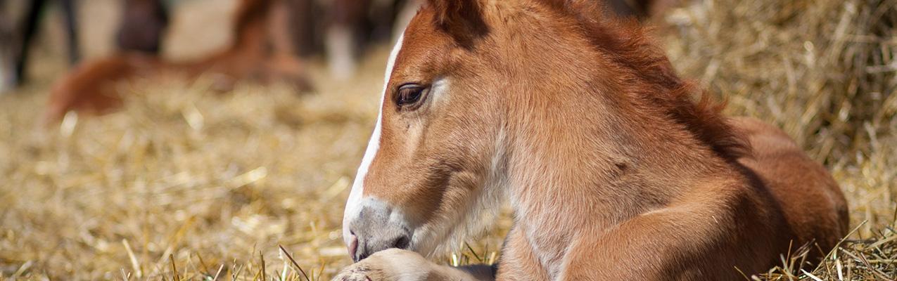 Gut zu wissen: Die ersten Fohlen kommen
