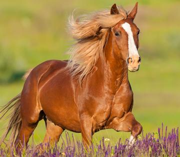 Eine kleine Reise durch den Pferdedarm Teil 2