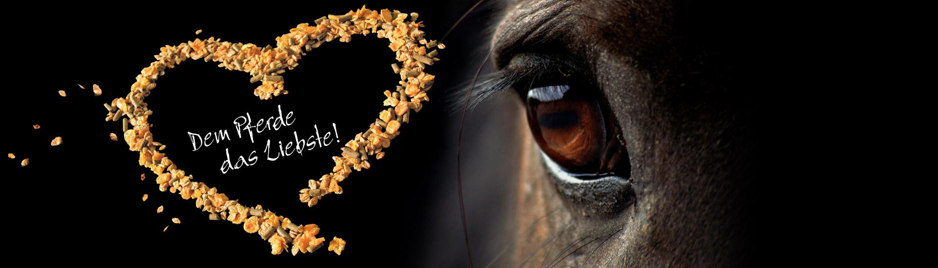 Dem Pferde das Liebste