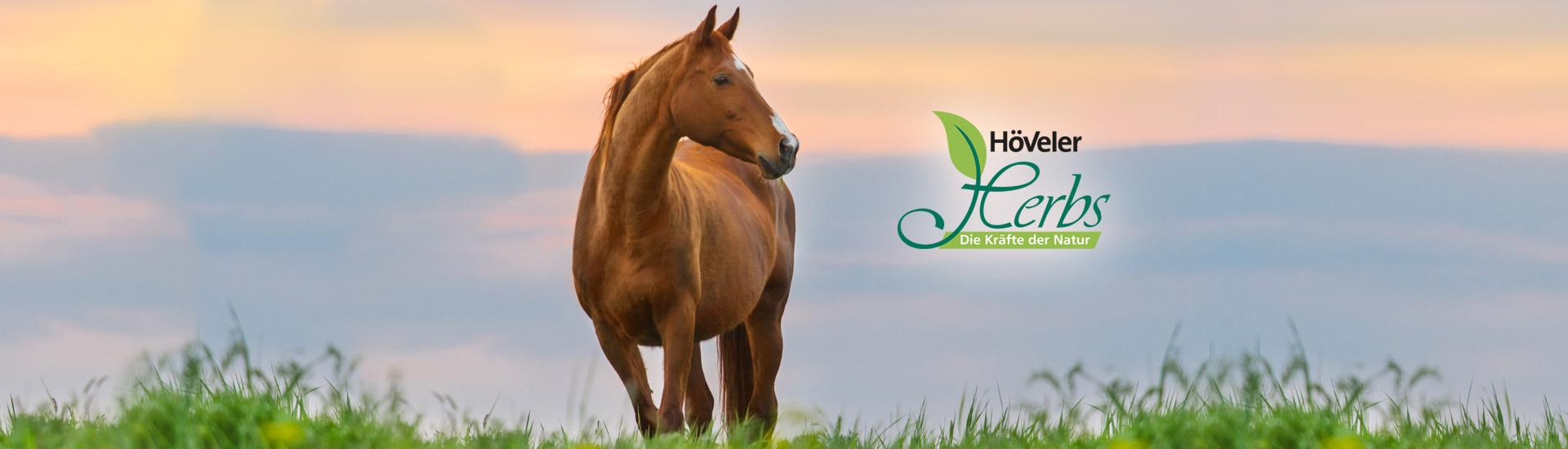 hoeveler-herbs