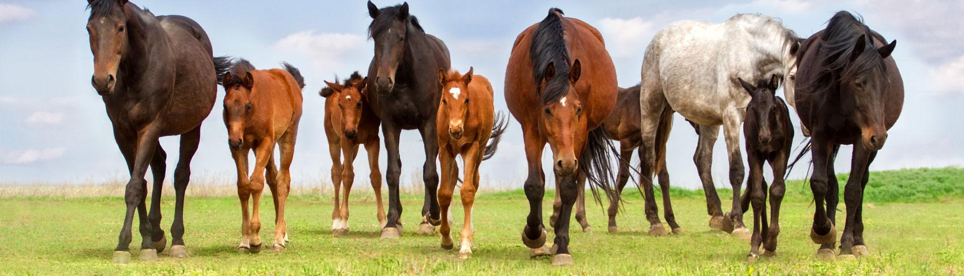 headbilder-kapitel-pferdefutter-zucht